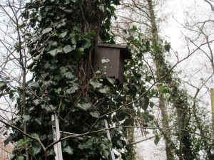 Bird, Bat & Owl Boxes